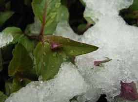Schnee3_kleiner