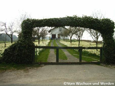 Narzissenhaus1wz