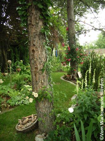 BaumundWaldbeet2_2006-06-05wz