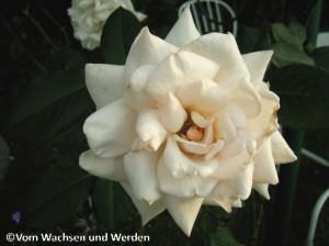 2007-08-10_Schwanenseewz