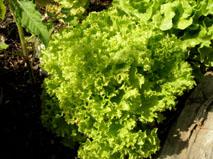 Salat8klein