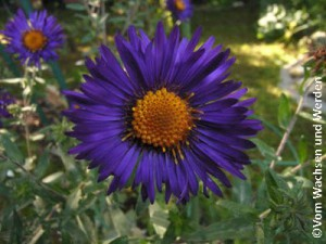 2007-10-06_Blitzblauwz