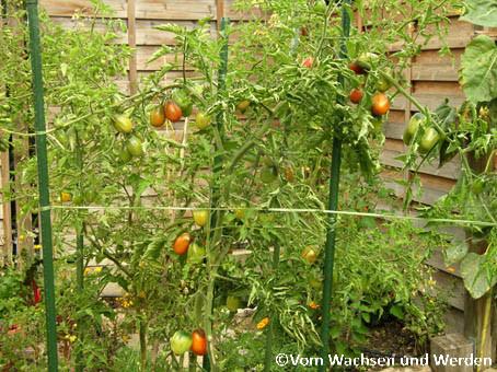 2007-10-02_Tomatenwz