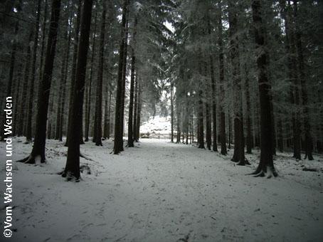 2008-01-05_Weg2wz