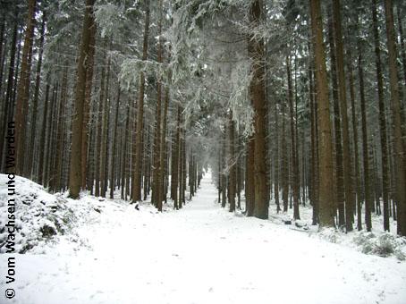 2008-01-05_Wegwz
