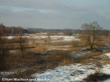 WeidmoosAbbauflaeche2007-12-28wz