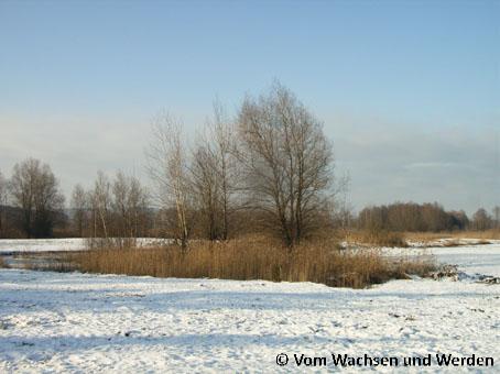 WeidmoosFlaeche32007-12-28wz