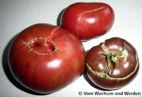tomatensorten noire de russe vom wachsen und werden. Black Bedroom Furniture Sets. Home Design Ideas