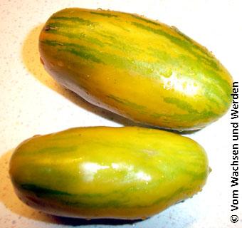 grünes Würstchen Tomate grün-gelb gestreift Tomate Green Sausage Samen