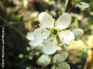 2009-04-17_03wz