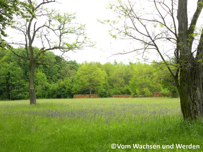2010-05-15_06wz