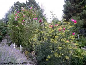 2010-08-17_08wz