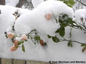 2010-12-03_bwz