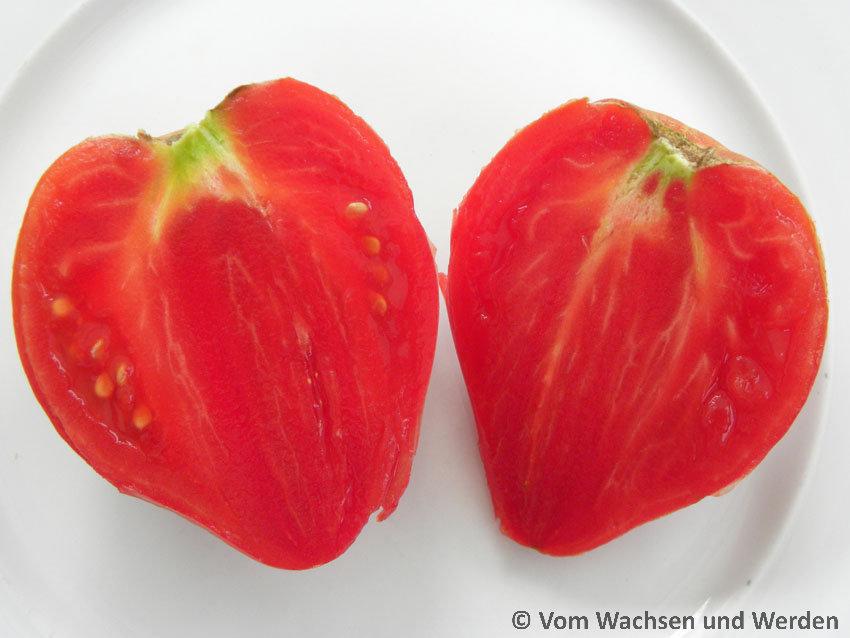 tomatensorten anna russian vom wachsen und werden. Black Bedroom Furniture Sets. Home Design Ideas