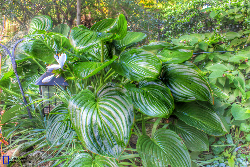 2016-08-21_07_PLANTS