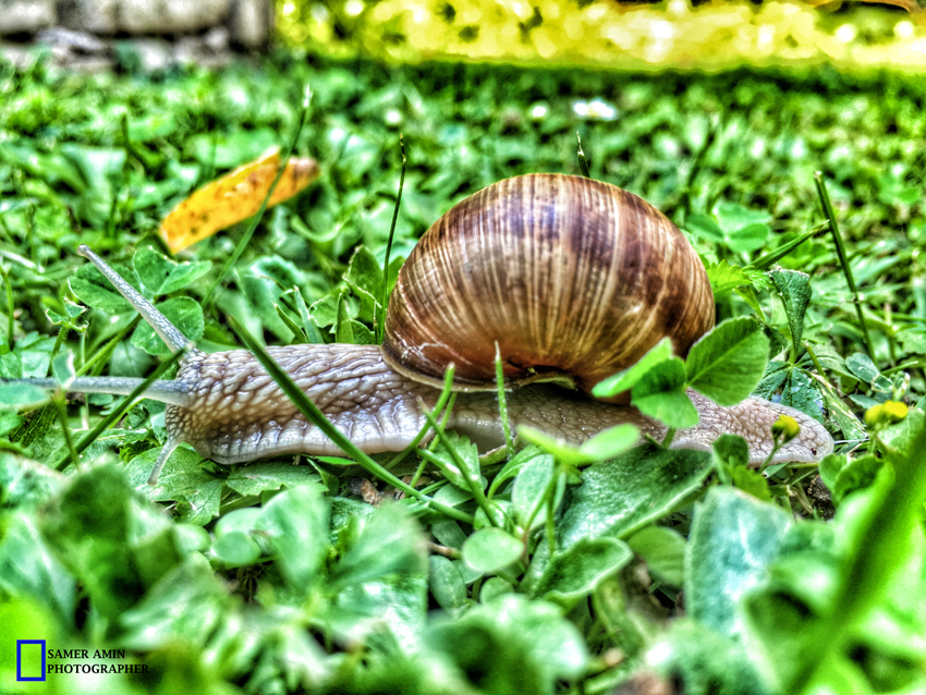 2016-08-21_08_small snail