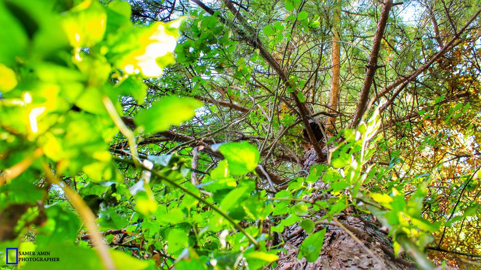 2016-08-21_10_UNDER TREE