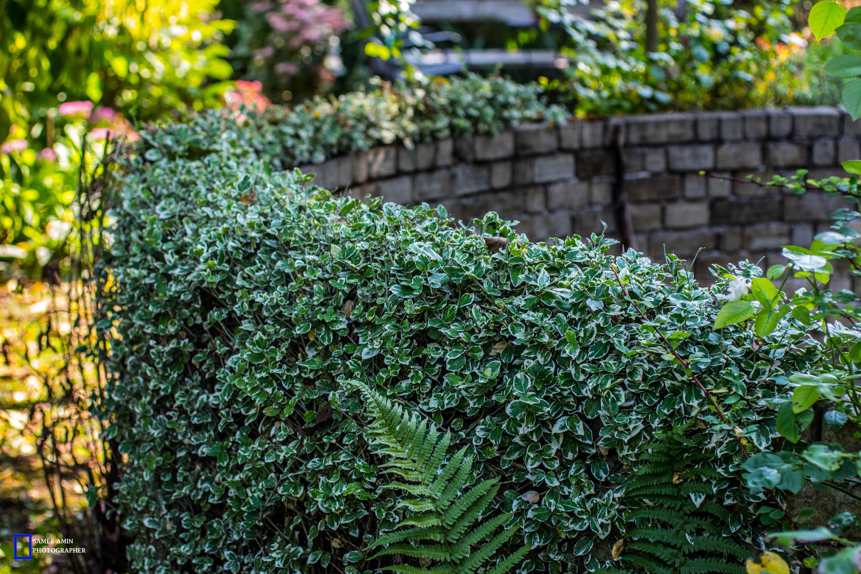 07_green-wall