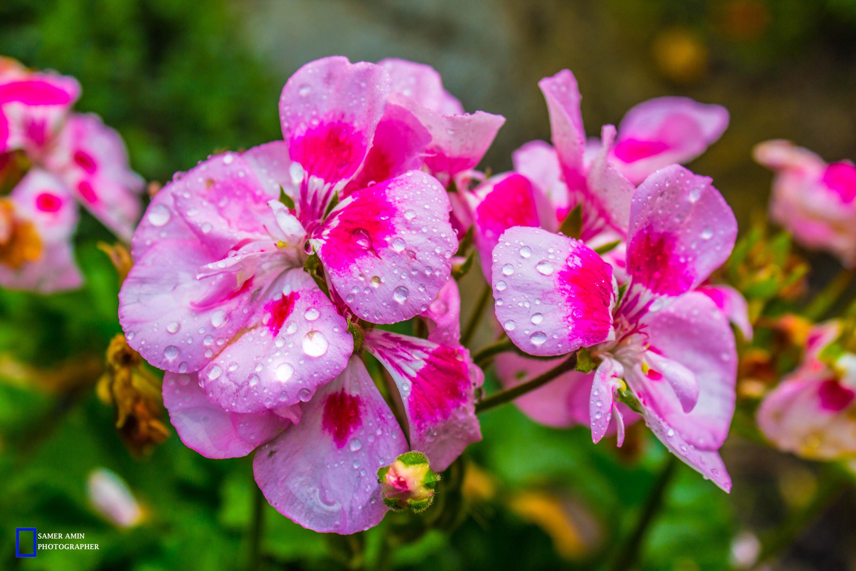 07_wet rose